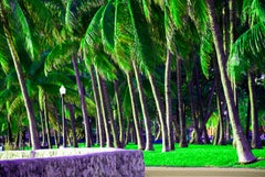 South Beach Tropical Palm Trees in Miami