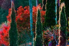 Tropical Colorful Foliage  Trees Flaunt Brilliant Color  Crimson leaves