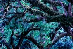 Yummie Trees 2, Primal Earth