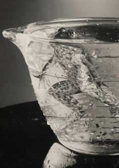 Bullfrog In Beaker - Submerged black & white silver silver gelatin amphibian