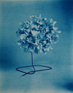 Catalpa Blooms - Surreal blue cyanotype, catalpa tree flower blossoms