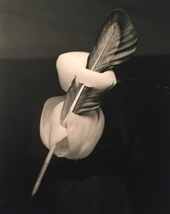 Feathered Magnolia - Surreal silver gelatin magnolia flower bloom, bird feather