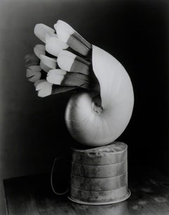Feathered Nautilus - Surreal silver gelatin shell w/ feathers balanced on vessel