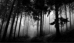 Robert Longo, Fairmount Forest