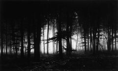 Robert Longo, Forest of Doxa