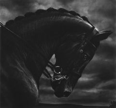 Untitled (Bucephalus)
