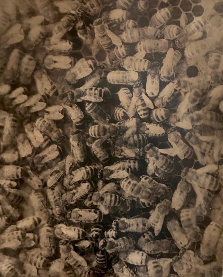 Robert Stivers Black and White Photograph - Hive, Santa Fe, NM, 2005
