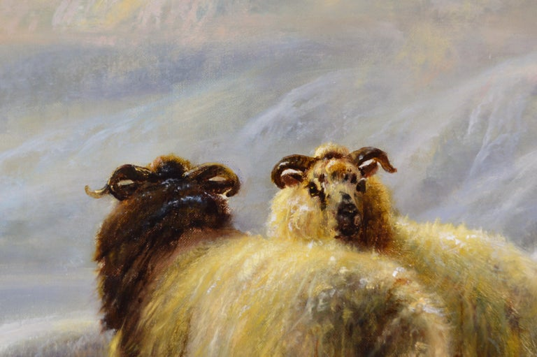 Robert Watson British, (1855-1921) Sheep in the Winter Highlands Oil on canvas, signed & dated 1901 Image size: 30 inches x 20 inches Size including frame: 37.5 inches x 27.5 inches Robert William Watson was born on 9 March 1855 at 33 Marlborough