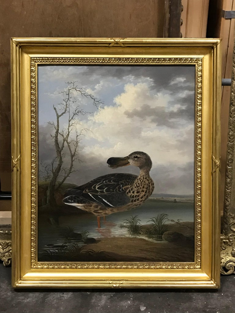 A Gadwall in a landscape by Robert Wilkinson Padley For Sale 1