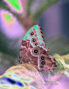 Hello, Butterfly Series, Contemporary Color Photography of Butterflies, Ed of 5
