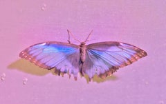 Hot-tie, Butterfly Series, Contemporary Color Photography
