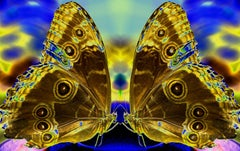 Union, Butterfly Series, Contemporary Color Photography