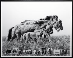 Generations- The Wild Horses of Sable Island