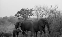 Family of Elephants, Kruger Park, South Africa, 2008