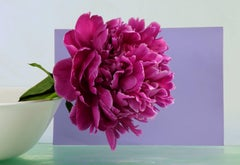 Peonies 10a, Botanical Still Life with Magenta Flower in White Bowl on Purple