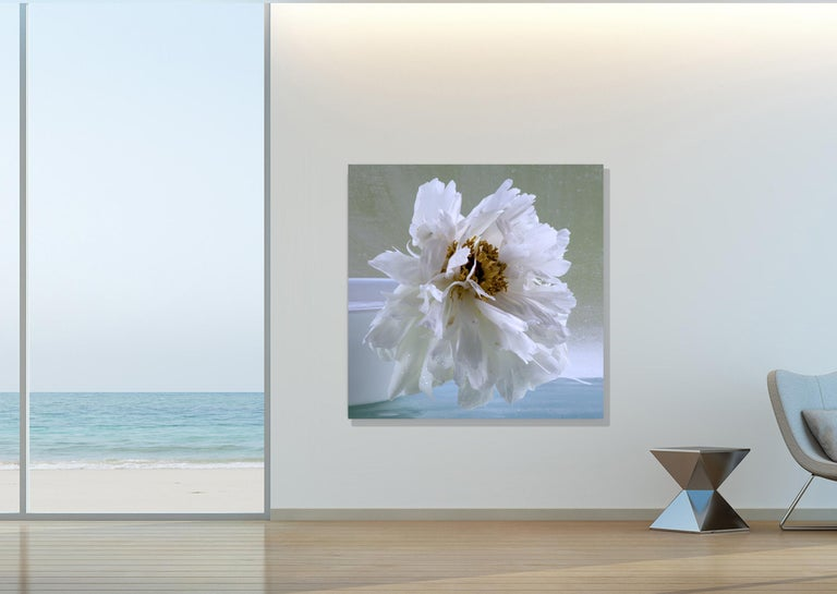 In this square still life photograph, a white peony on a pale blue tablecloth is beautifully complemented by a soft, gray green background.  Edition 1/10. Archival pigment print (photograph) on Epson hot press bright paper mounted on Sintra with UV