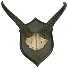 Roland Ward Taxidermy Antelope Horns by Rowland Ward