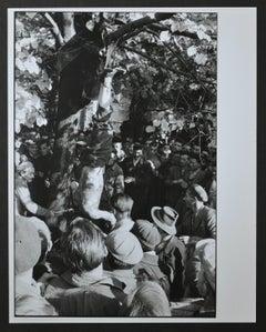 Hungarian revolutionaries hanging pro-Soviet activist, Hungary 1956.