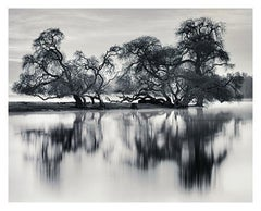 Bare Trees By River