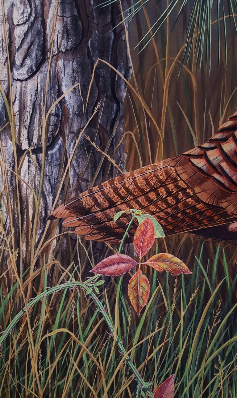 Eastern Wild Turkey For Sale 6