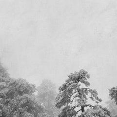 Blanco 2 (Photograph, Print, Nature, Wildlife)