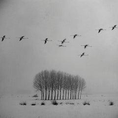 Blanco 3 (Photograph, Print, Nature, Wildlife)