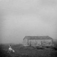 Blanco 6 - White landscape, Snow scene, Nature photography, Dog, Farmhouse