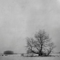 Blanco 7 (Photograph, Print, Nature, Wildlife)