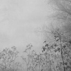 Blanco 8 - Nature photography, Winter imagery, Trees, Landscape imagery