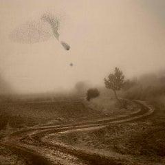 Mirando al cielo 6 - Birds, Nature photography, Skyscape, Sepia tone, Photograph