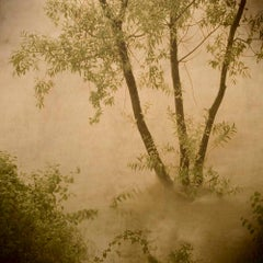 Primo Tempo 2 - Flora and fauna, Contemporary prints, Nature imagery, Landscape