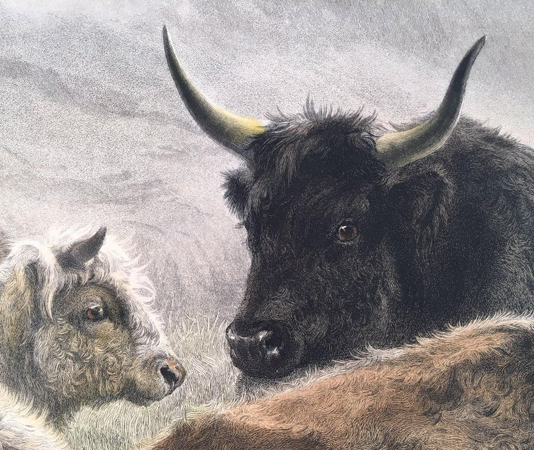 Cattle Resting on a Hillside in the Alps - Print by Rosa Bonheur