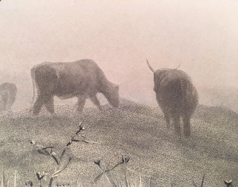 Cattle Resting on a Hillside in the Alps For Sale 3