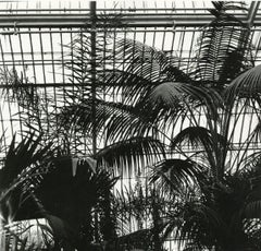 Kew Gardens Rosemary Ellis Windows VIII Silver Gelatin Photograph Print Palm