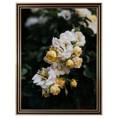 """""""Roses, Dawn I"""" Still Life Photograph 2014 by Nick Burchell"""