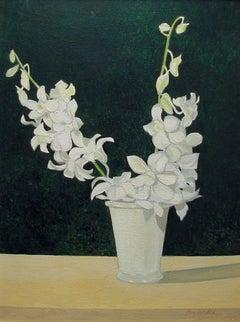 Moth Orchids