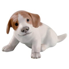 Royal Copenhagen Porcelain Figurine, Pointer Puppy, 1920s