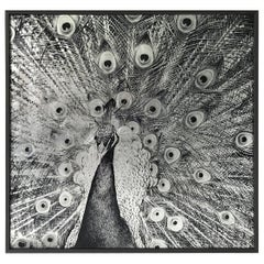 Royal Peacock Print