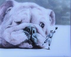 Moody (pet bulldog dog baseball player surrealism animal neutral tones)