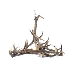 Rustic English 1960s Naturally Shed Fallow Deer Antler Six-Light Chandelier