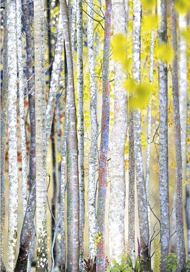 Ruud van Empel Color Photograph - Collage #3
