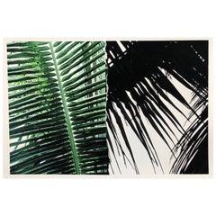 Untitled (Yucatan Palm Ripped Print)