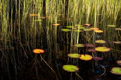 Lily Pads, Photograph, Abstract Landscape, Reflections on New Hampshire Pond