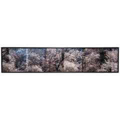 """Sakura 11"" by Doug Fogelson"