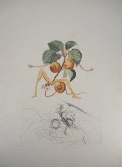 Flordali: Abricot Chevalier (Fruit) - Etching (Field 69-11D)
