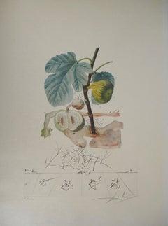 Flordali : Fig (The Fruits) - Original Handsigned Etching (Field 69-11B)