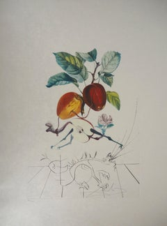 Flordali : The Fruits, Eve's Apple - Original Handsigned Etching (Field 69-11A)