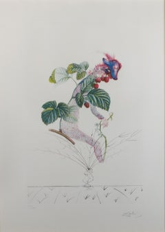 """Framboisier (Raspberry Bush)"" original color lithograph and etching by Dalí­"