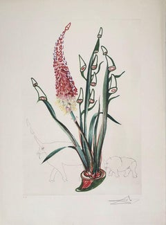 Kniphofia Aphrodisiaca - Surrealistic Florals - Original Etching Handsigned