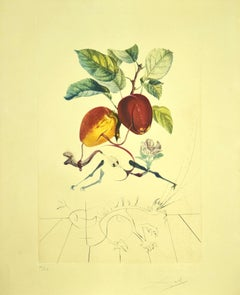 Pomme Dragon (Eve's Apple) - Original Etching by S. Dalì - 1969